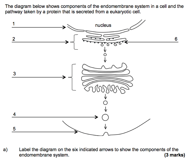 eukaryotic endomembrane system cell diagram visio wiring solved the below shows components of endomemb question in a and pathway taken by