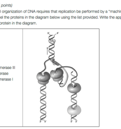 question 1 7 points the antiparallel organization of dna requires that replication be performed [ 2046 x 1335 Pixel ]