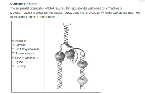 small resolution of question 1 7 points the antiparallel organization of dna requires that replication be performed