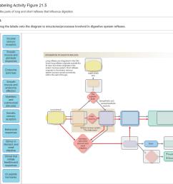 Label Taste Bud Diagram - Wiring Diagrams Dock