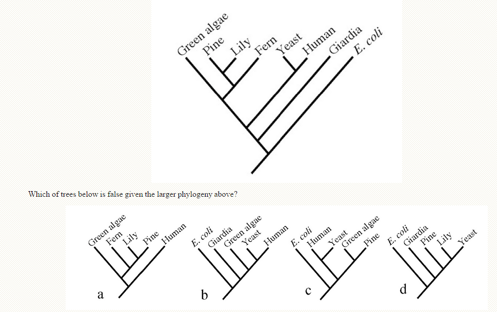 Solved: Which Of Trees Below Is False Given The Larger Phy