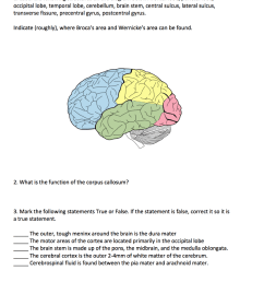 solved 1 label the following structures on the diagram b diagram of the occipital lobe [ 850 x 1024 Pixel ]