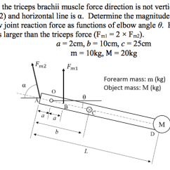 Triceps Brachii Diagram Mk4 Golf Speaker Wiring Now Assume That The Muscle Force D Chegg Com