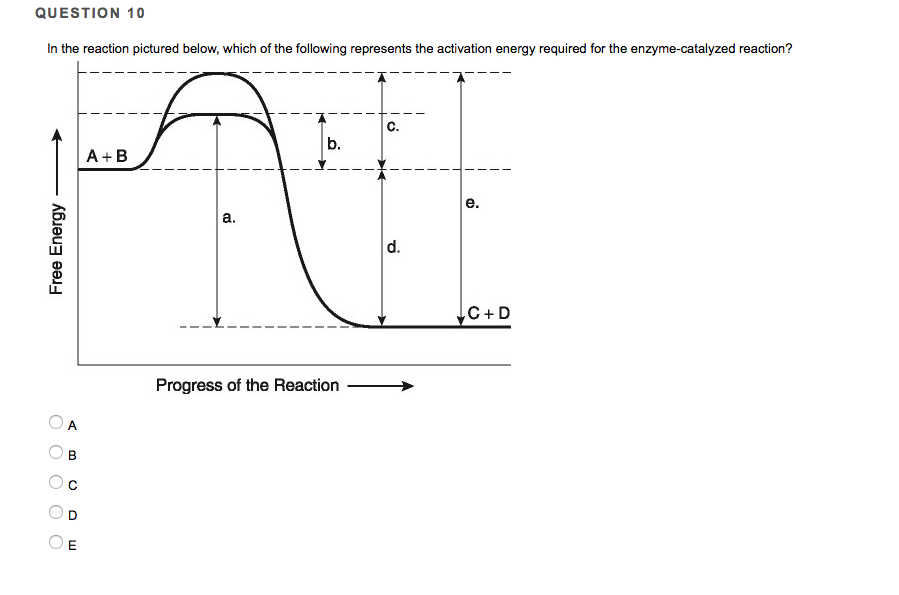 Solved: QUESTION 10 In The Reaction Pictured Below, Which