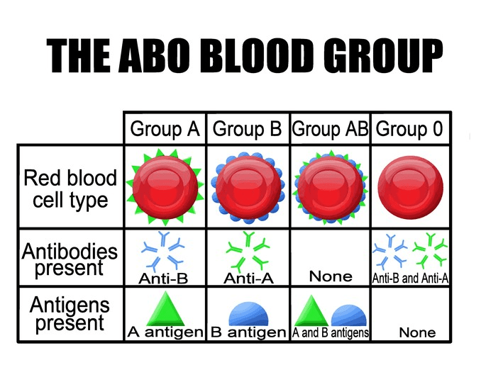 Solved: Background INFO There Are Four Types Of Blood: A ...