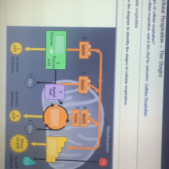 Photosynthesis And Cellular Respiration Cycle Diagram Briggs Stratton Parts Solved: Part A-chemical Cycling In An Ecosystem Drag The L... | Chegg.com