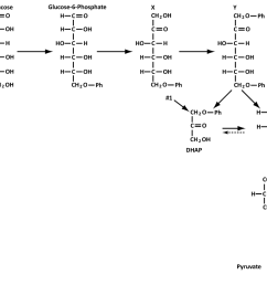 question under aerobic conditions bacteria degrade glucose via glycolysis the most common form of glycolysis that you have studied in class is also  [ 1024 x 878 Pixel ]