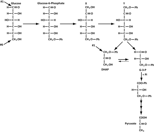 small resolution of question under aerobic conditions bacteria degrade glucose via glycolysis the most common form of glycolysis that you have studied in class is also