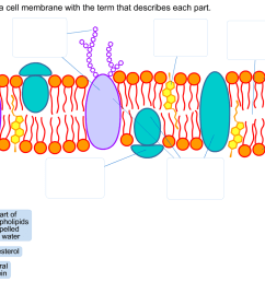 label the parts of a cell membrane with the term t [ 1348 x 822 Pixel ]