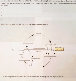 see more show transcribed image text 1 explain why water must be present for the bryophytes to complete the sexual portion of their life cycle 2  [ 1024 x 1009 Pixel ]