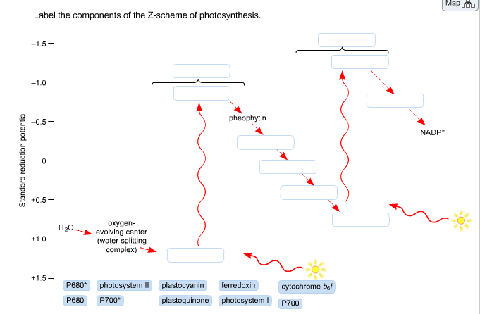 photosynthesis z scheme diagram dna transcription translation solved label the components of photosynth