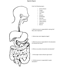 digestive diagram color the following organs o salivary glands o ongue o esophagus o live [ 791 x 1024 Pixel ]