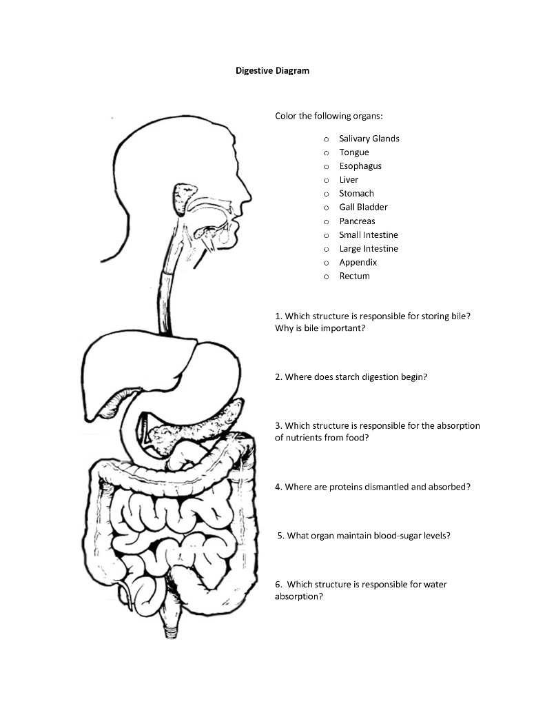 medium resolution of digestive diagram color the following organs o salivary glands o ongue o esophagus o live