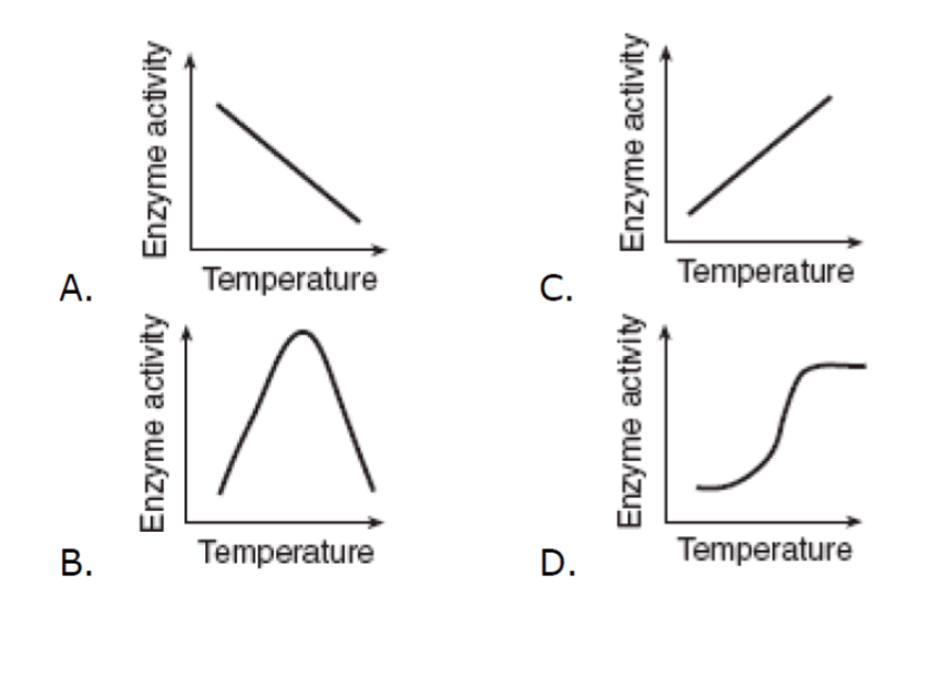 Solved: Enzymes Have An Optimum Temperature At Which They
