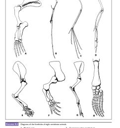 after examining the diagram of a human skeleton in figure 9 4 identify these same skeletal features homologous structures for each of the creatures in  [ 1655 x 2046 Pixel ]