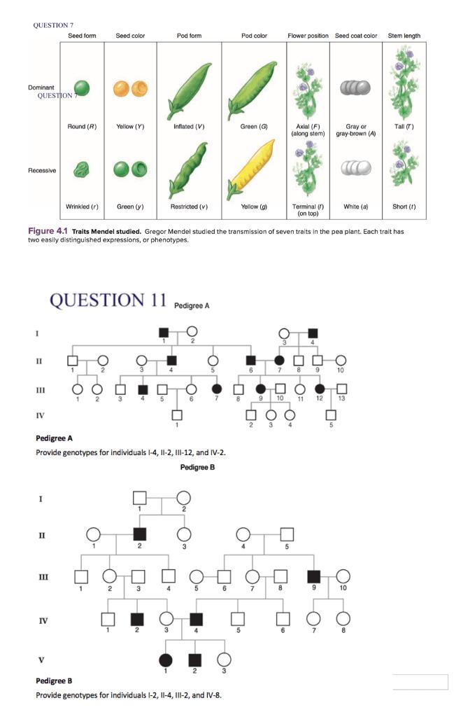 Solved: Genetics 7. One Of Mendel's Crosses Is Described I