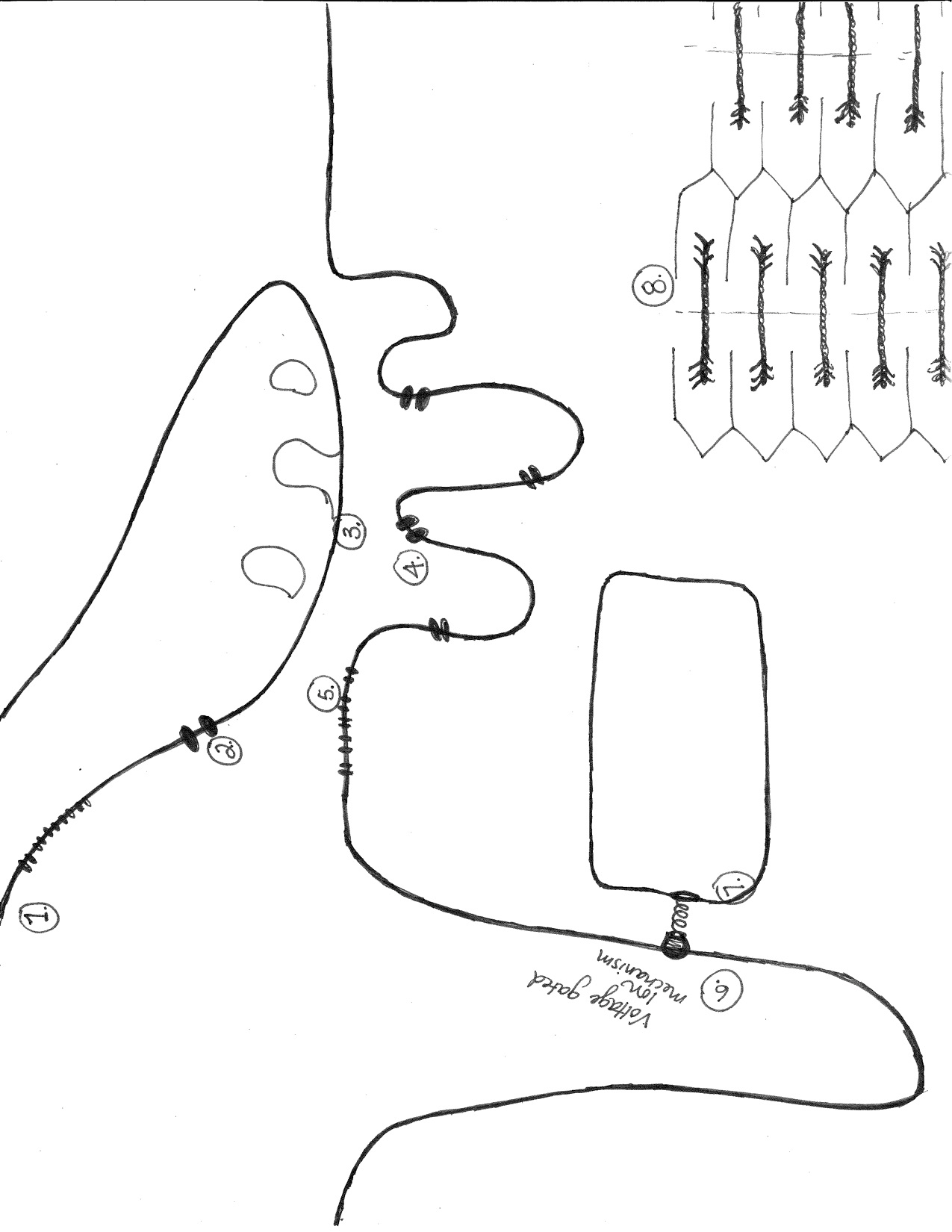 Solved: Attached Is A Sketch Of Neuromuscular Junction And