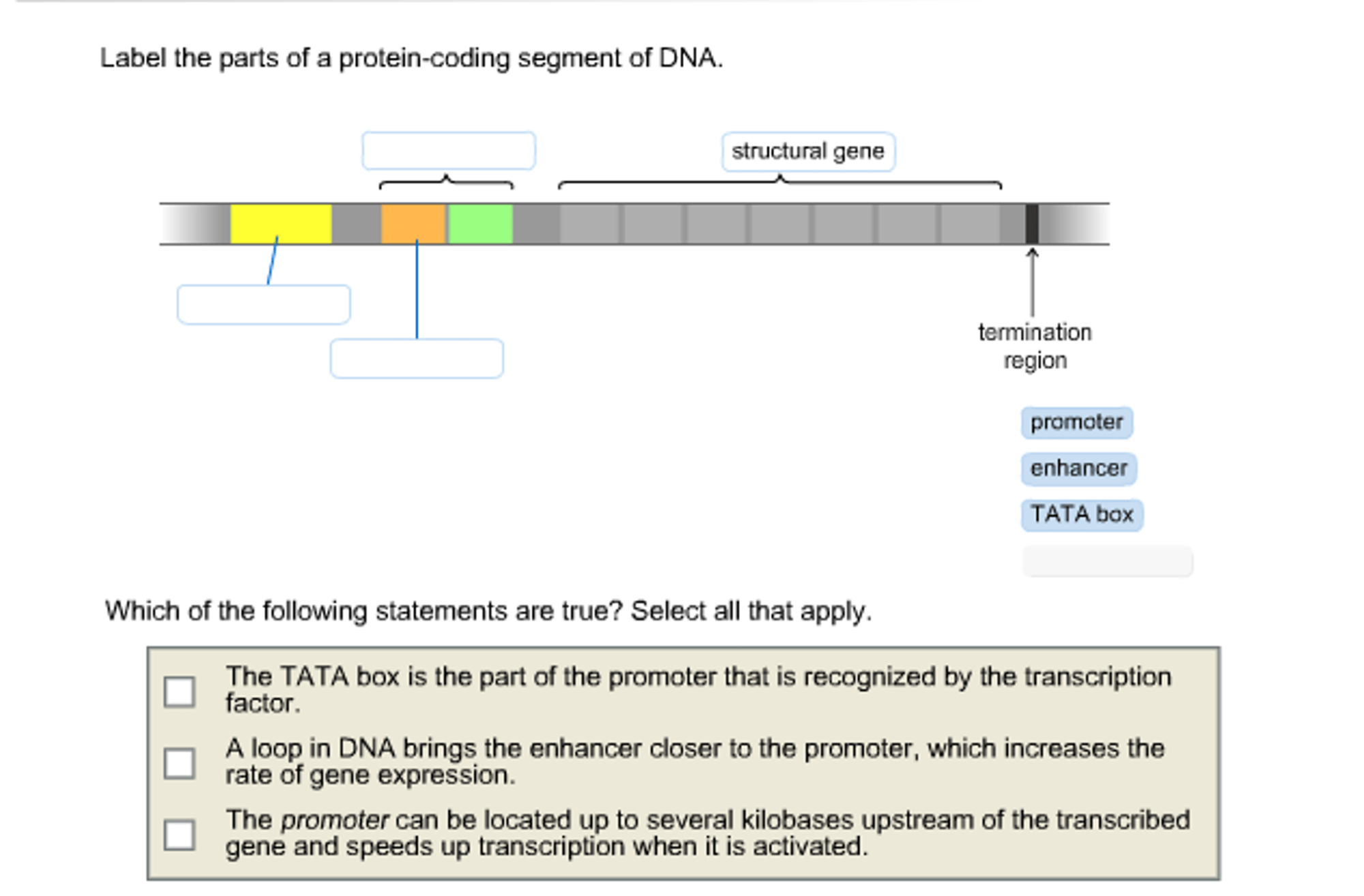 hight resolution of label the parts of a protein coding segment of dna
