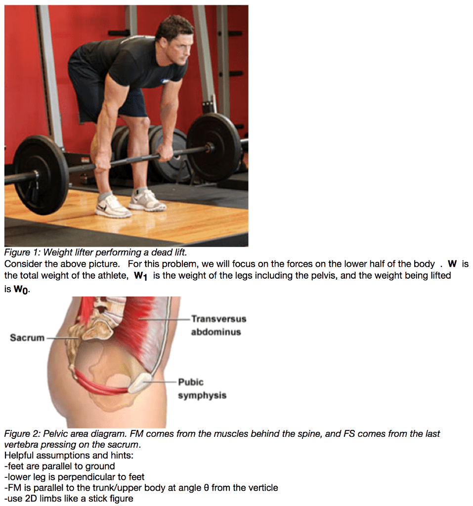 hight resolution of figure 1 weight lifter performing a dead lift consider the above picture for