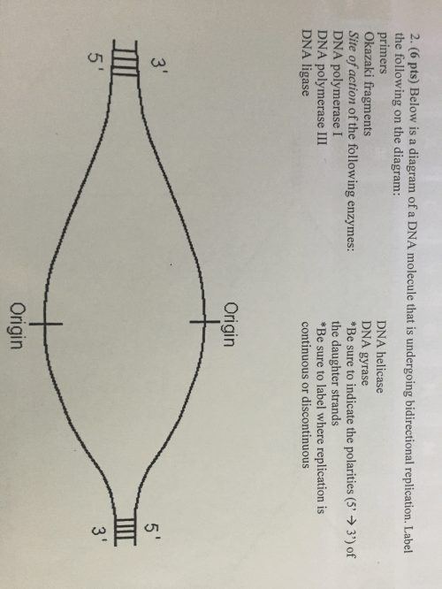 small resolution of below is a diagram of a dna molecule that is under