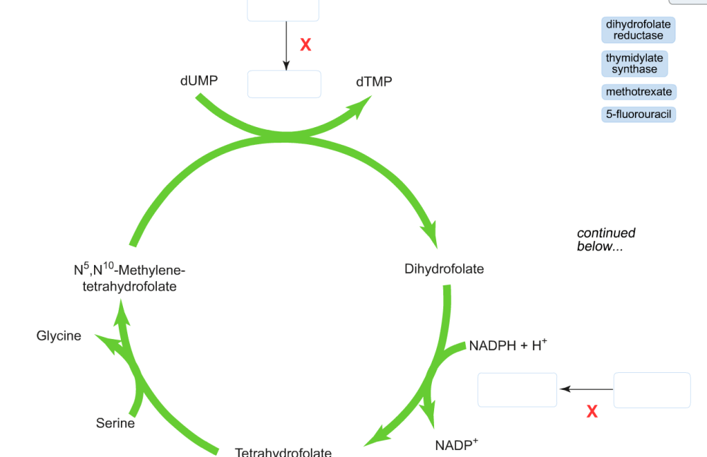 medium resolution of image for label the diagram with the correct enzyme and drug