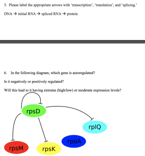 small resolution of please label the appropriate arrows with transcription translation and splicing dna