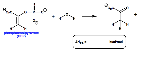 Phosphoenolpyruvate (PEP) Is A High Energy Interme