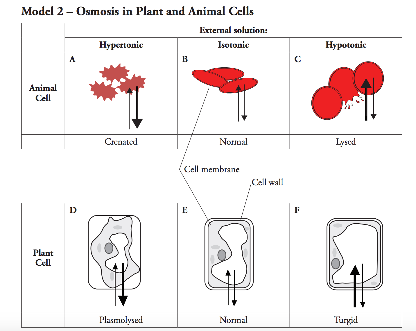 plant and animal cell diagram quiz stc 1000 temperature controller wiring solved 11 using your knowledge of cells which type c