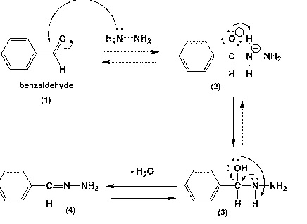 Solved: Mechanism Of The Hydrazine Addition To Benzaldehyd