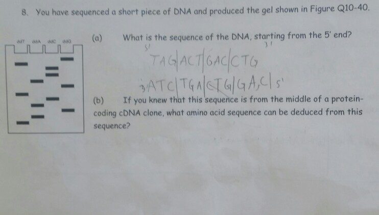 Solved: Hi Everyone! Cell Biology Stuff. I Need Some Help