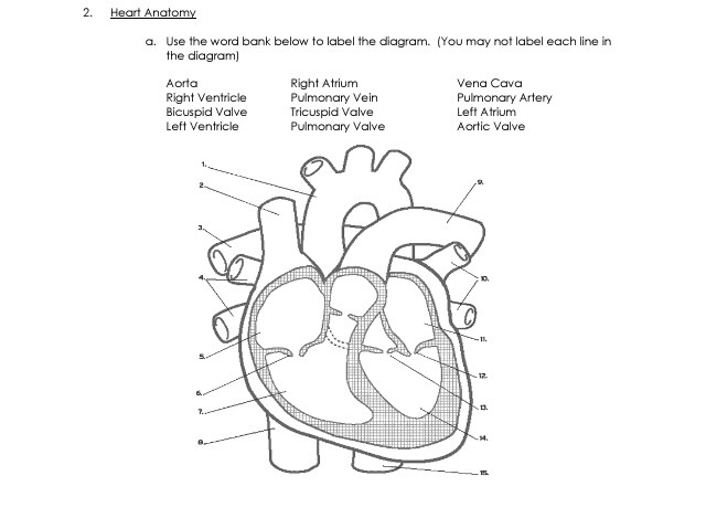 Solved: Heart Anatomy A. Use The Word Bank Below To Label