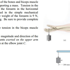 Forearm Bones Diagram 208 230 Volt Wiring Solved Figure A Is Of The And Biceps Musc