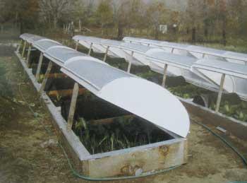 Winter Gardening Best Practice Food Growing In Winter