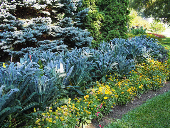 edible landscaping easy ways