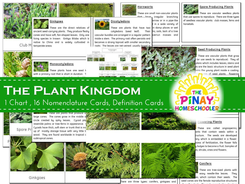 The Plant Kingdom Pinay Homeschooler Shop