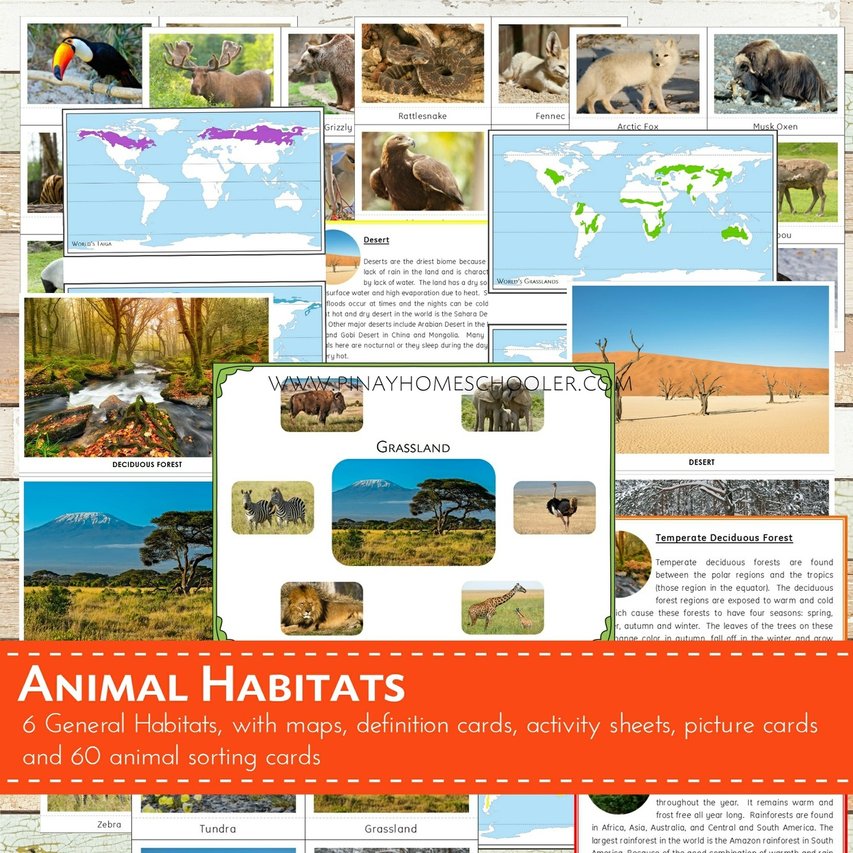 Animal Habitats Sorting Cards Pinay Homeschooler Shop
