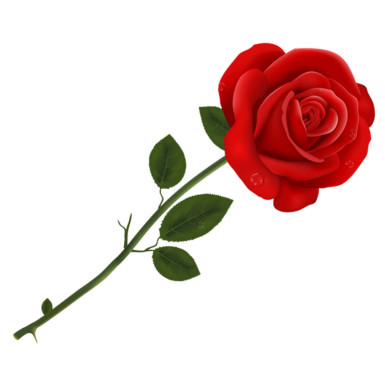 1 single rose