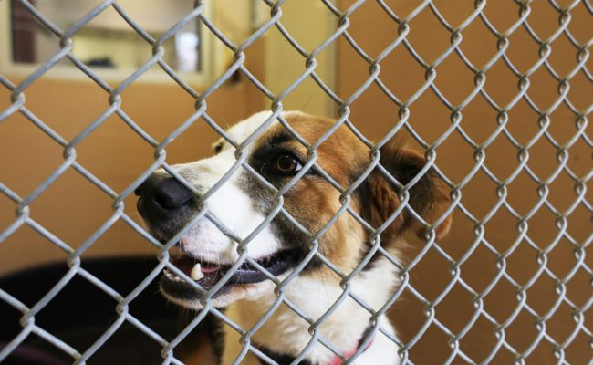 Brownsville Animal Shelter To Pursue No Kill Status The Monitor