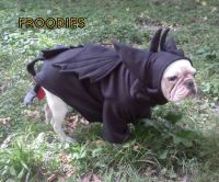 French Bulldog Boston Terrier Pug Dog Froodies Hoodies ...