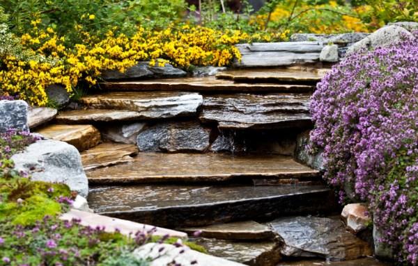 of backyard garden