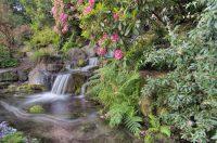 50 Pictures of Backyard Garden Waterfalls (Ideas & Designs)