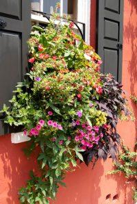 32 Stunning Flower Box Ideas & Arrangements