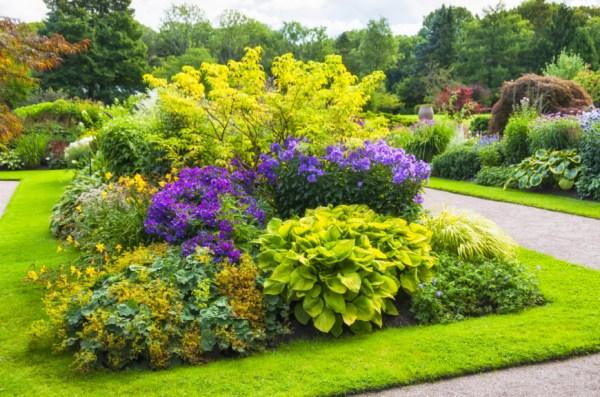 clever backyard shrub garden