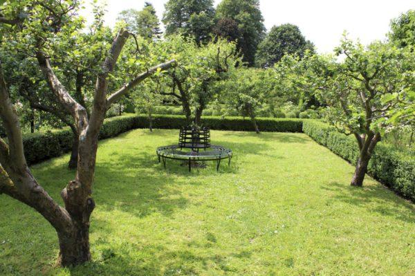 brilliant backyard tree ideas