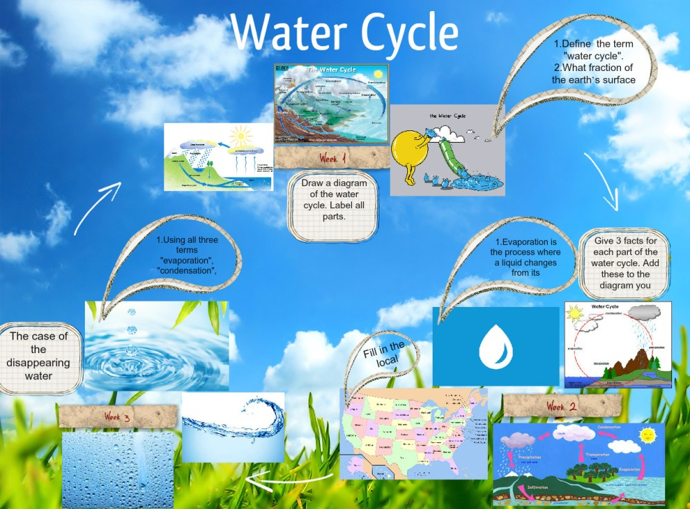 medium resolution of water cycle bug cycle life l fe life lyfecicle glogster edu interactive multimedia posters