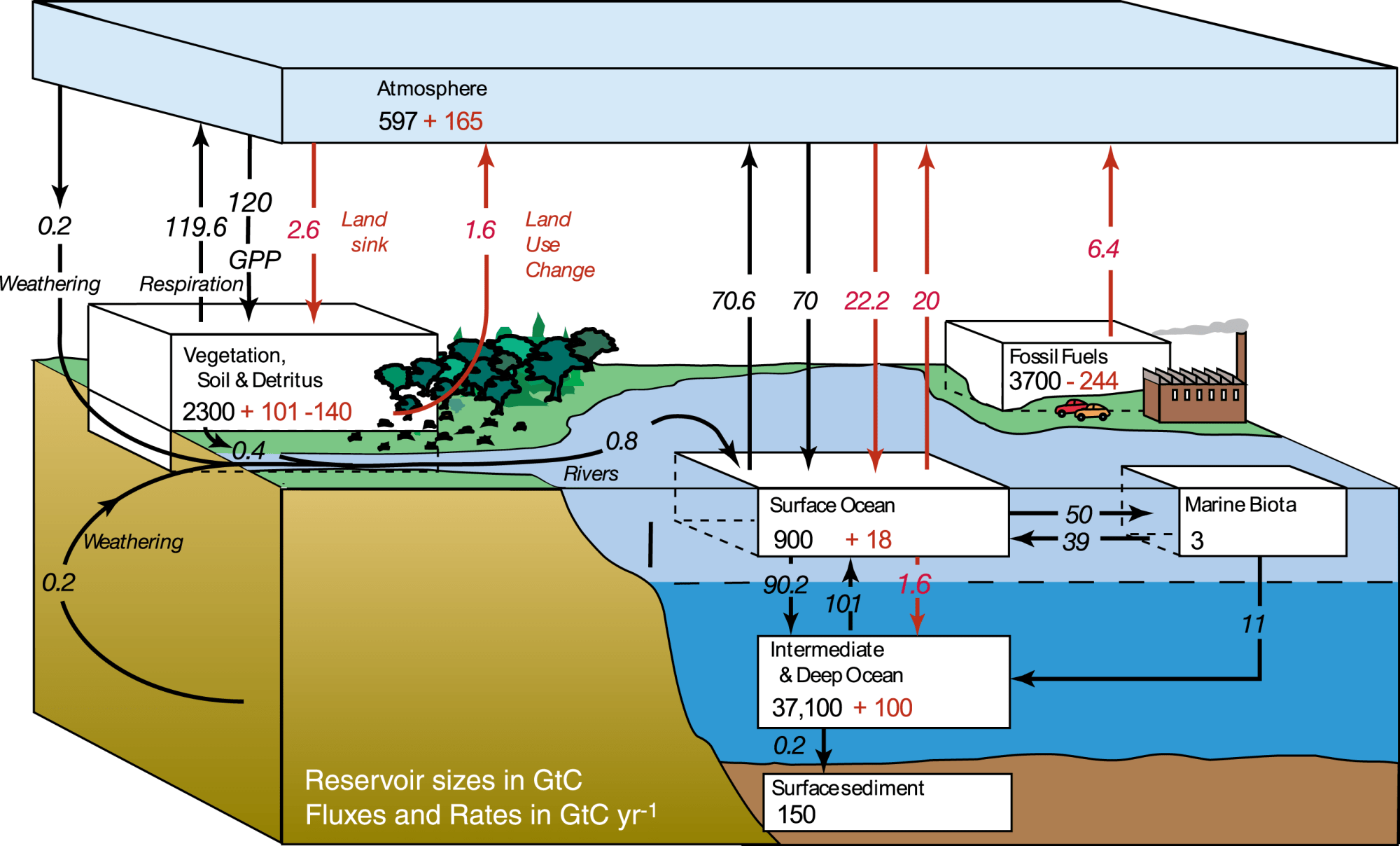hight resolution of diagram of the carbon and nitrogen cycle