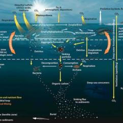 Pacific Ocean Food Web Diagram Building Electrical Wiring Symbol Legend 6a: Down To The Deep - Ocean's Biological Pump