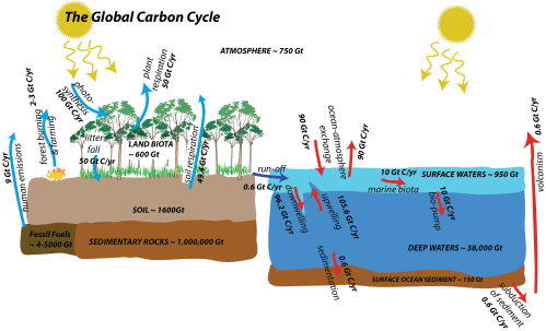 small resolution of images global carbon cycle