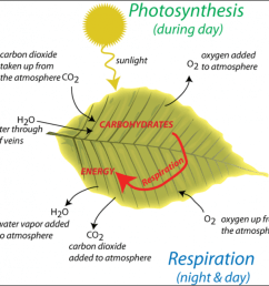 photosynthesis and respiration [ 1103 x 1073 Pixel ]