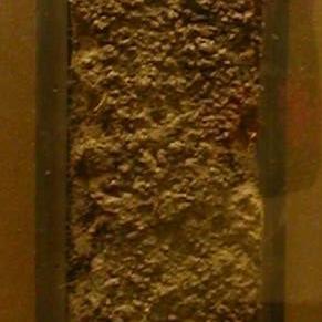Making a Soil Monolith